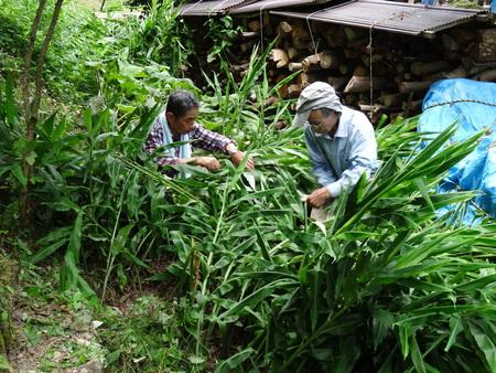 広場の草も昆虫たちのために残して刈る  in  孝子の森_c0108460_1811449.jpg