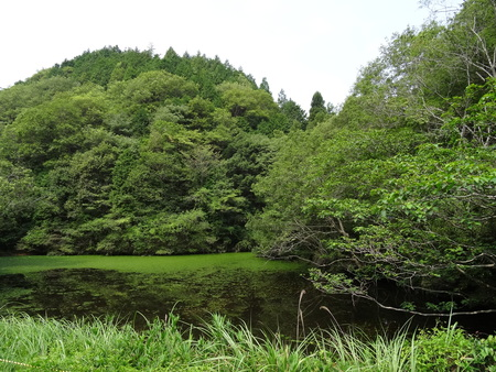 広場の草も昆虫たちのために残して刈る  in  孝子の森_c0108460_1813563.jpg