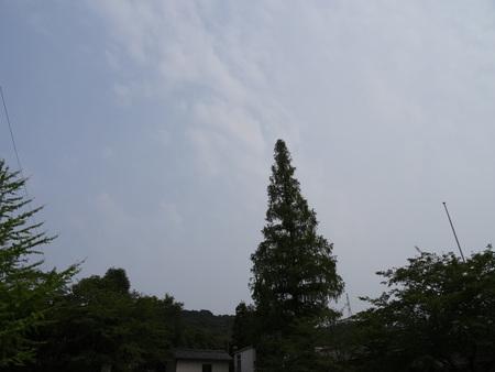 広場の草も昆虫たちのために残して刈る  in  孝子の森_c0108460_1864143.jpg