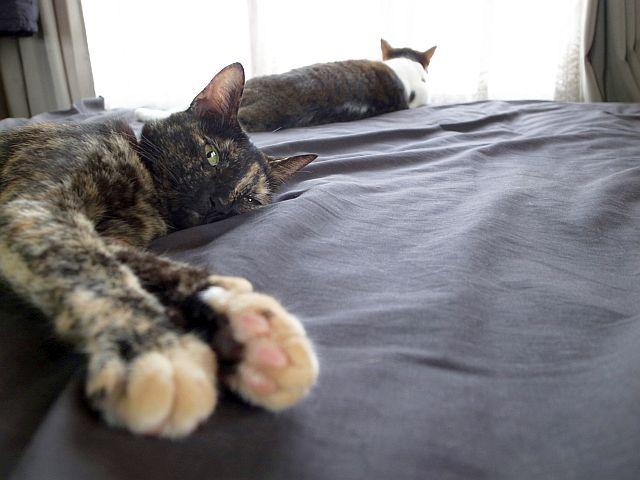猫たちはエアコンが嫌い_e0220163_18322267.jpg