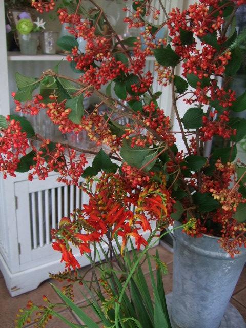 オークリーフ(ワイルドな花たち)_f0049672_14261065.jpg