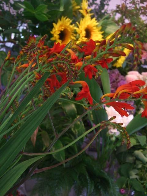 オークリーフ(ワイルドな花たち)_f0049672_1426274.jpg
