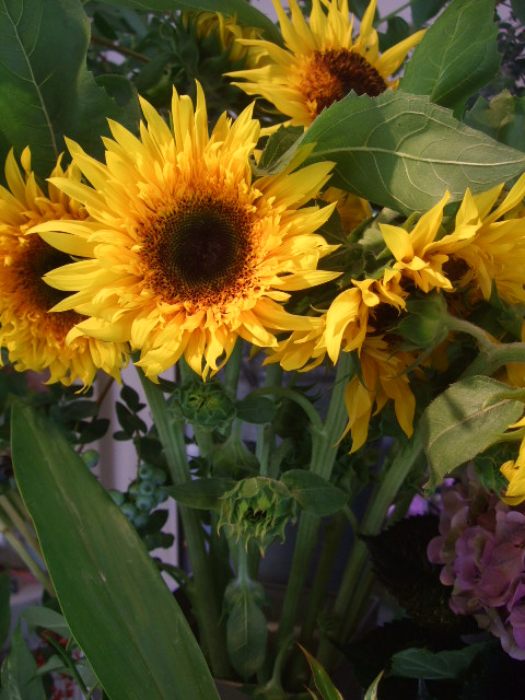 オークリーフ(ワイルドな花たち)_f0049672_14264558.jpg