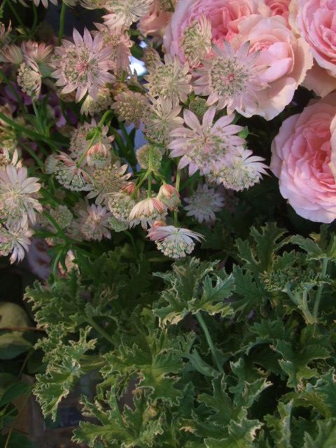 オークリーフ(ワイルドな花たち)_f0049672_1428299.jpg