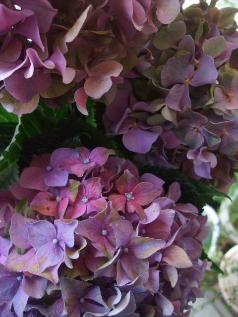 オークリーフ(ワイルドな花たち)_f0049672_14285015.jpg