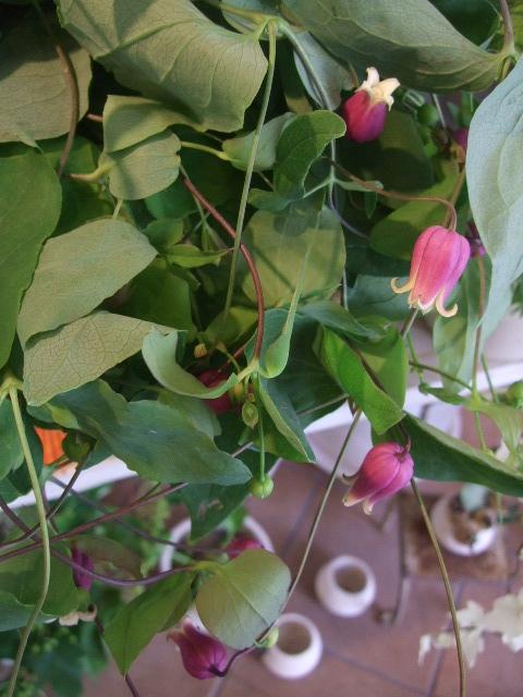 オークリーフ(ワイルドな花たち)_f0049672_14287100.jpg