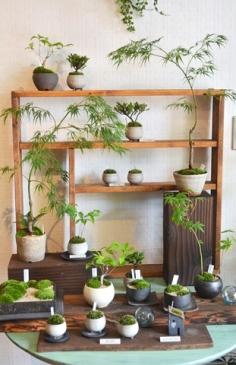 植物関連の古本 入荷しました_d0263815_17454835.jpg