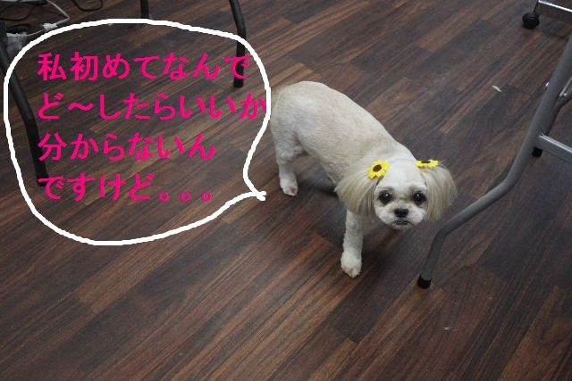 b0130018_192487.jpg