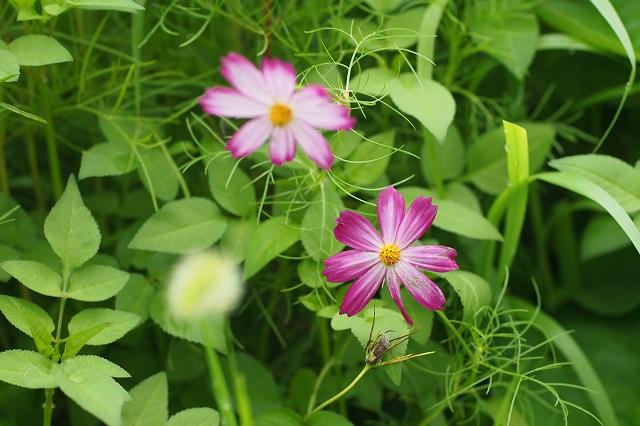 道端に咲く花を楽しむ _f0214527_10263914.jpg