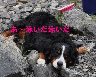 またまた川遊び_e0270846_1283033.jpg