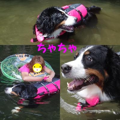 ジニーと福豆の初泳ぎ_e0270846_1344720.jpg