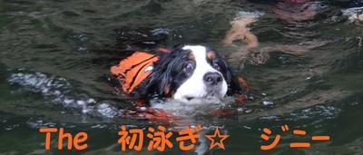 ジニーと福豆の初泳ぎ_e0270846_14342399.jpg