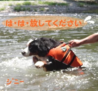 ジニーと福豆の初泳ぎ_e0270846_1434421.jpg