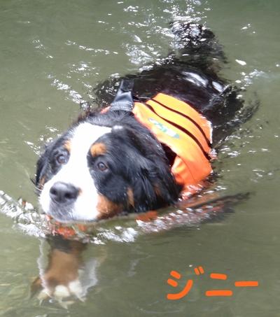 ジニーと福豆の初泳ぎ_e0270846_17251386.jpg