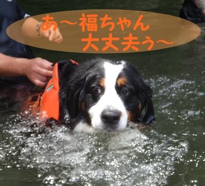 ジニーと福豆の初泳ぎ_e0270846_17253237.jpg
