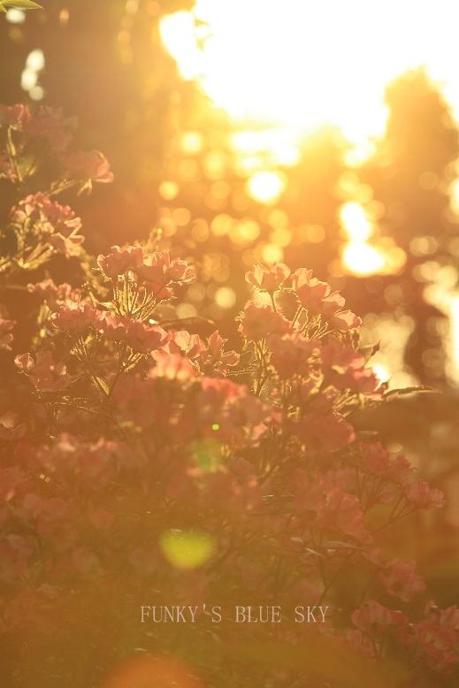 夕暮れ時の庭で・・ PART2_c0145250_1112574.jpg