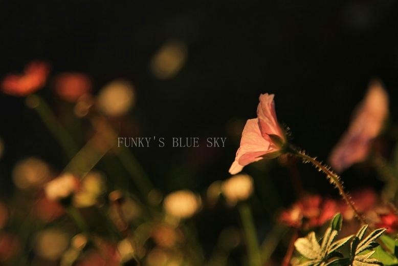夕暮れ時の庭で・・ PART2_c0145250_1113074.jpg