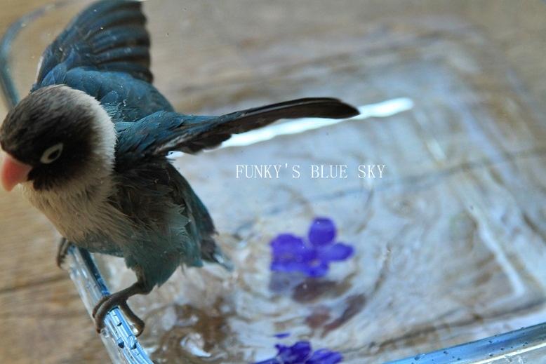 水浴(び)B.Bの記録 → 新しい鳥カゴ!? (続・6月23日)_c0145250_11203494.jpg