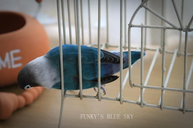 水浴(び)B.Bの記録 → 新しい鳥カゴ!? (続・6月23日)_c0145250_1122381.jpg