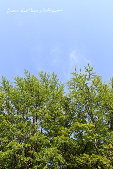 風景の写真 夏の緑と空_b0133053_0202849.jpg