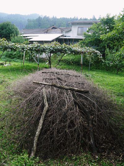 株式会社旬援隊 原木しいたけの本部伏せ作業、頑張りました!!_a0254656_18305748.jpg