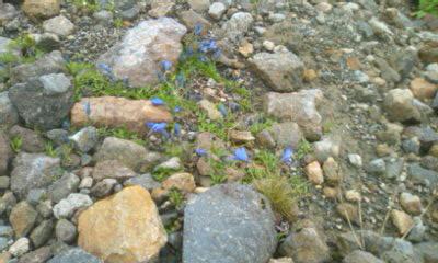 お花畑から大黒岳頂上まで・・・☆^-^☆_f0061067_22281931.jpg