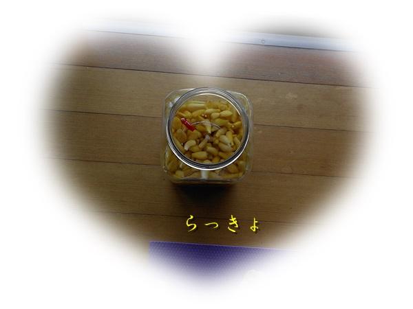 d0007475_16584271.jpg