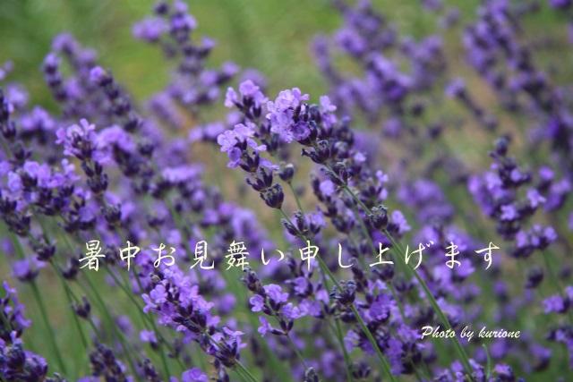 b0003280_1749345.jpg