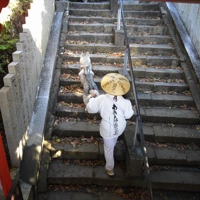Memory of the second pilgrimage with husky HANA_c0049299_19255613.jpg
