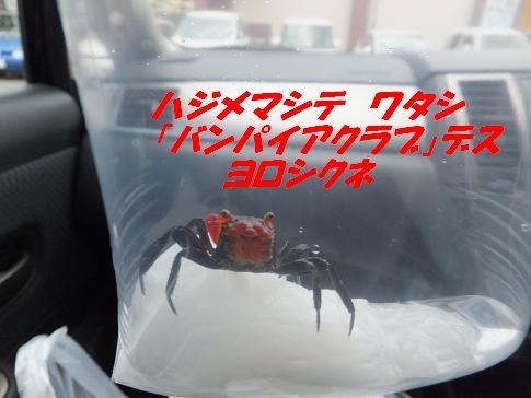 f0179203_17553016.jpg