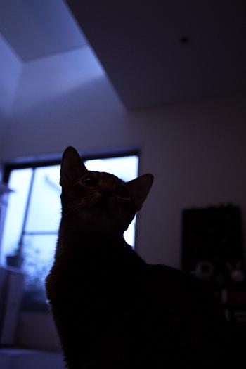[猫的]夕方の光_e0090124_23122833.jpg
