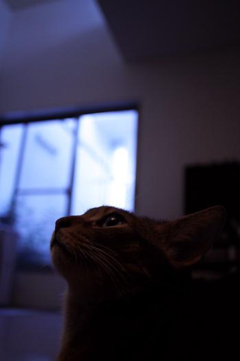 [猫的]夕方の光+トロメオ間接光_e0090124_23151082.jpg