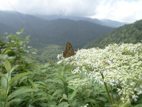 オオゴマシジミ他 この土日で出会えた蝶。_d0254540_17155243.jpg