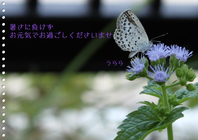 f0165677_213386.jpg