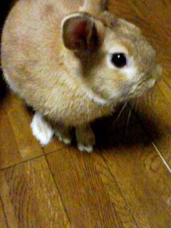 ♡泣き虫・悩み虫ぽんさん♡_d0261282_20153974.jpg
