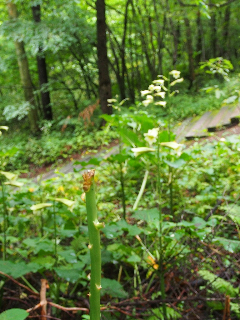 青葉公園から奥へ-その1-_f0138096_16462963.jpg