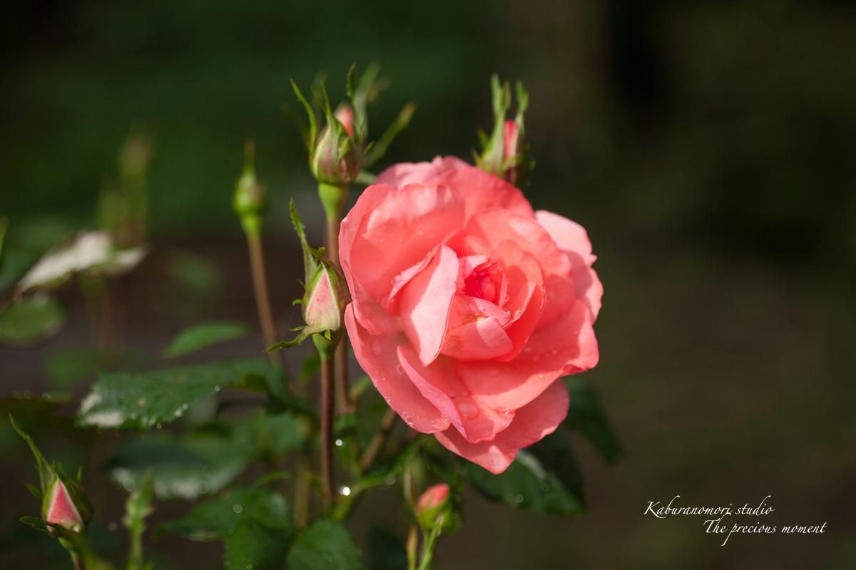 庭にオオムラサキ_c0137403_2210728.jpg