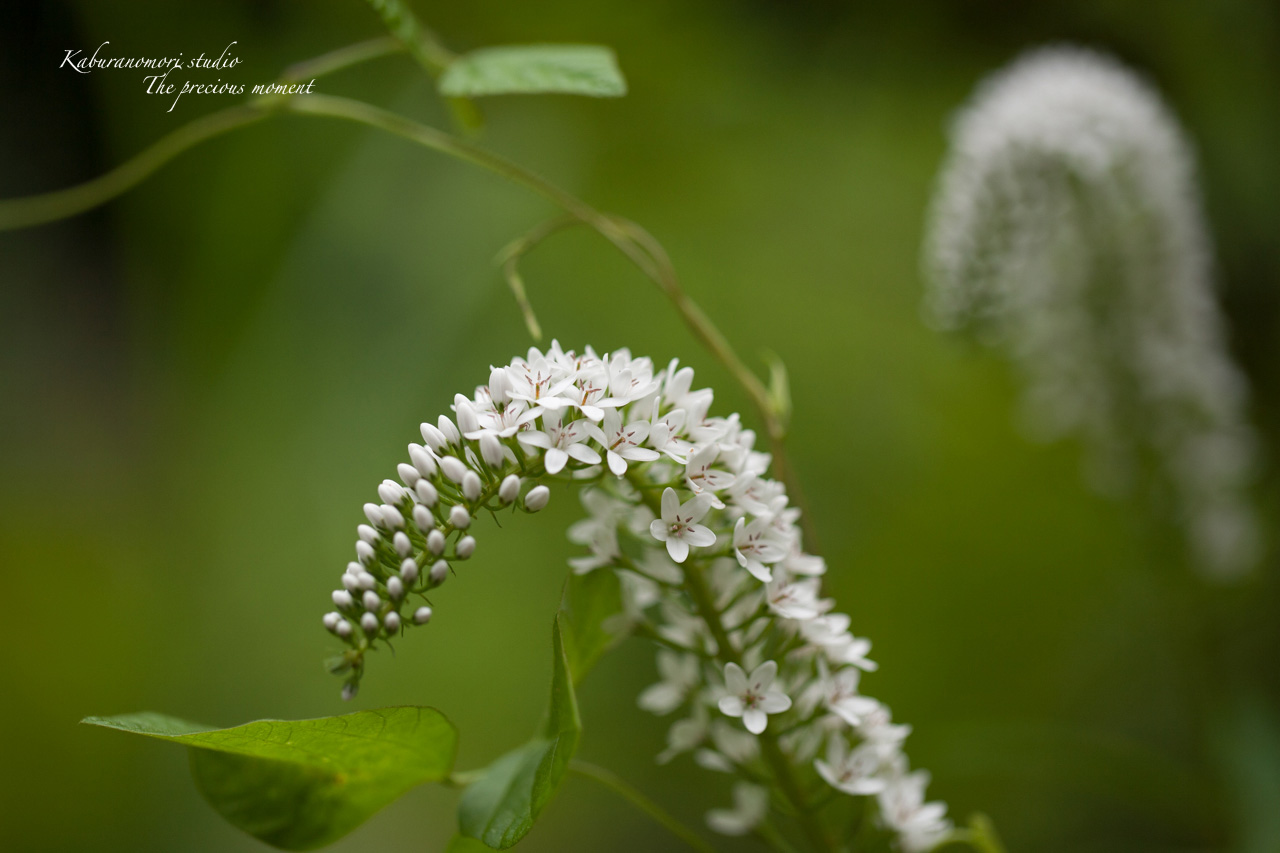 庭にオオムラサキ_c0137403_2253333.jpg
