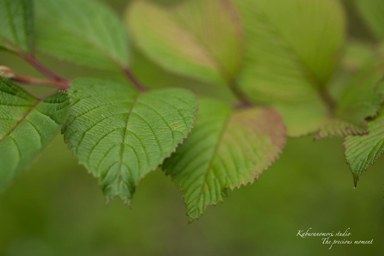 庭にオオムラサキ_c0137403_2262659.jpg