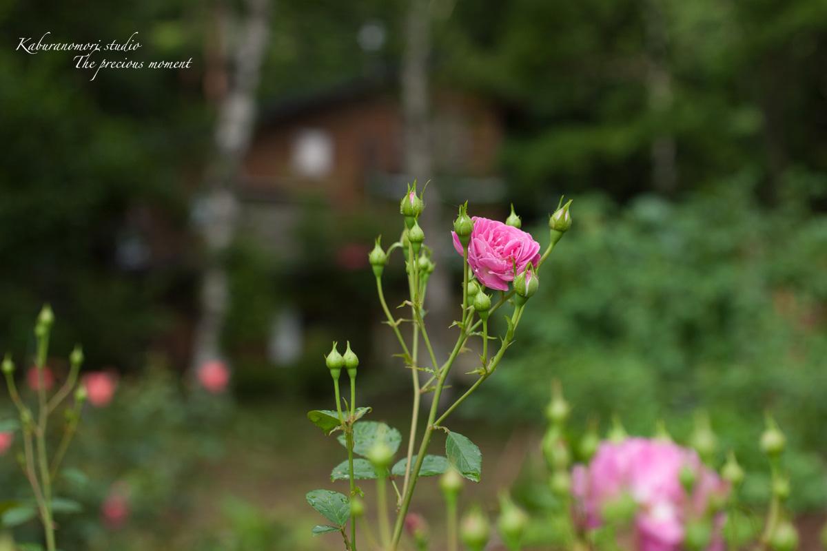 庭にオオムラサキ_c0137403_226343.jpg