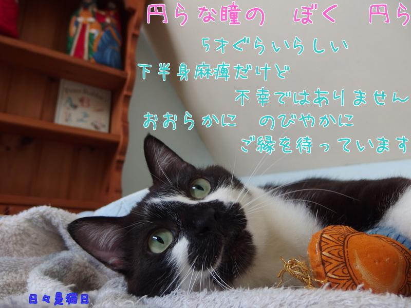 a0177105_1561243.jpg