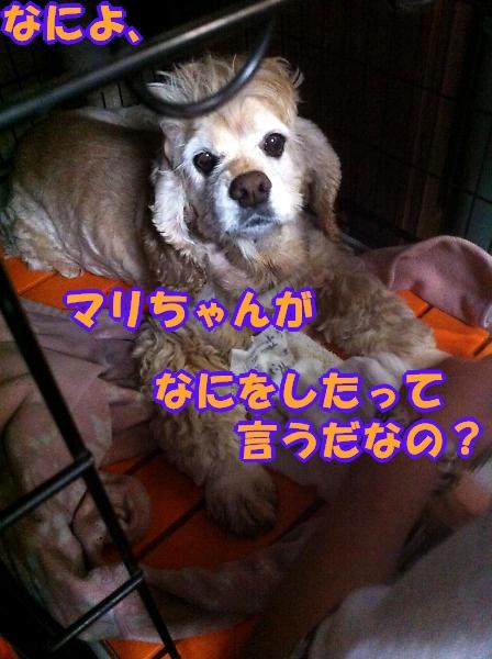 b0067012_13113670.jpg