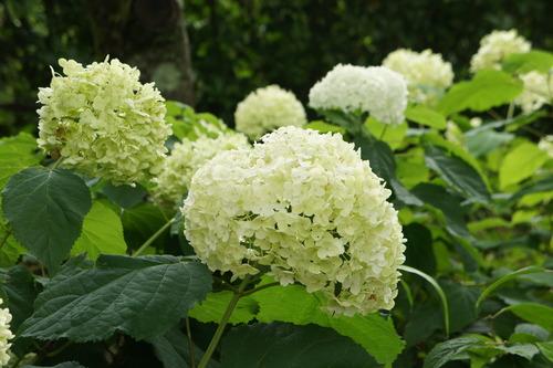 箱根 彫刻の森_f0215714_1774760.jpg