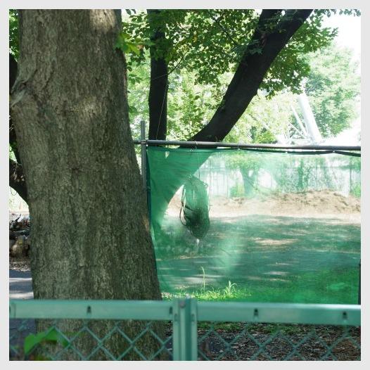 ■ 夏の公園_b0148920_18434059.jpg