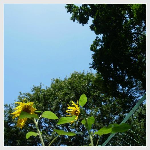 ■ 夏の公園_b0148920_18442568.jpg
