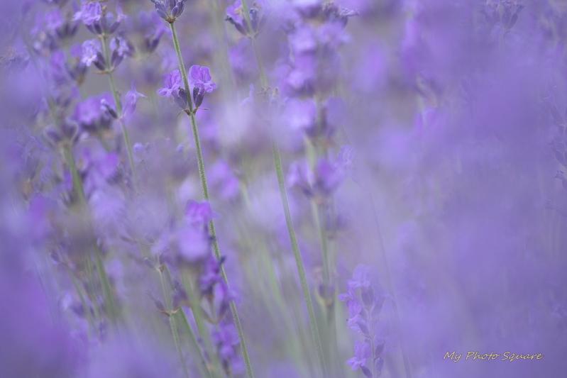 ラベンダーの香り_c0167028_22475930.jpg