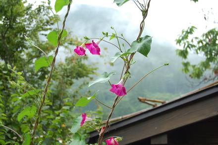 涼しい雨日和_d0249047_9565587.jpg