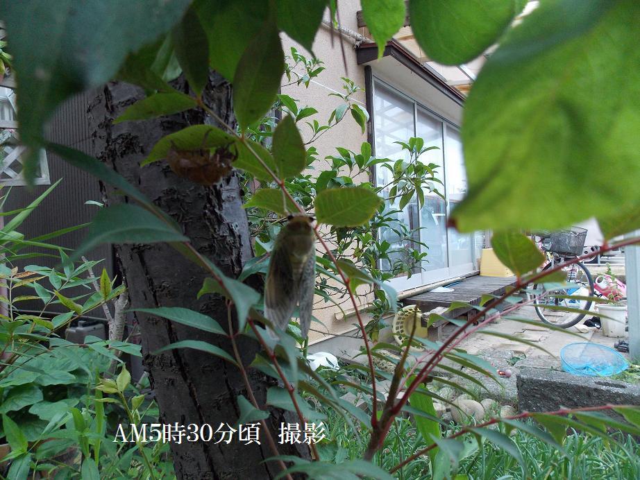 b0193252_2004425.jpg