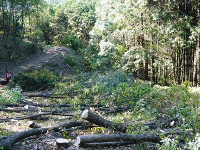 わが家のきのこ狩り!おうちで原木しいたけ栽培 その1_a0254656_17461961.jpg