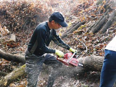 わが家のきのこ狩り!おうちで原木しいたけ栽培 その1_a0254656_17525596.jpg